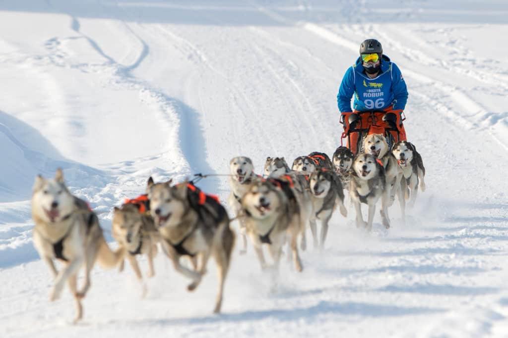 170 deltagare från 20 länder med sammanlagt mer än 1 000 hundar gjorde i helgen upp i draghunds-VM på skidstadion i Sveg. Foto: Morgan Grip