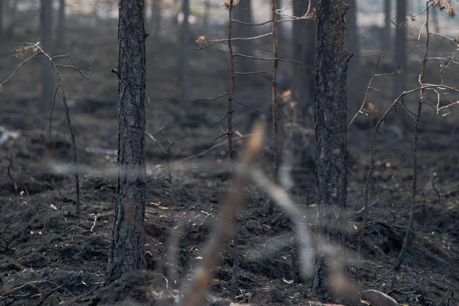 Enligt räddningstjänstens uppdatering under tisdagsförmiddagen är situationen relativt oförändrad på de båda brandplatserna i Svegsområdet. Foto: Morgan Grip