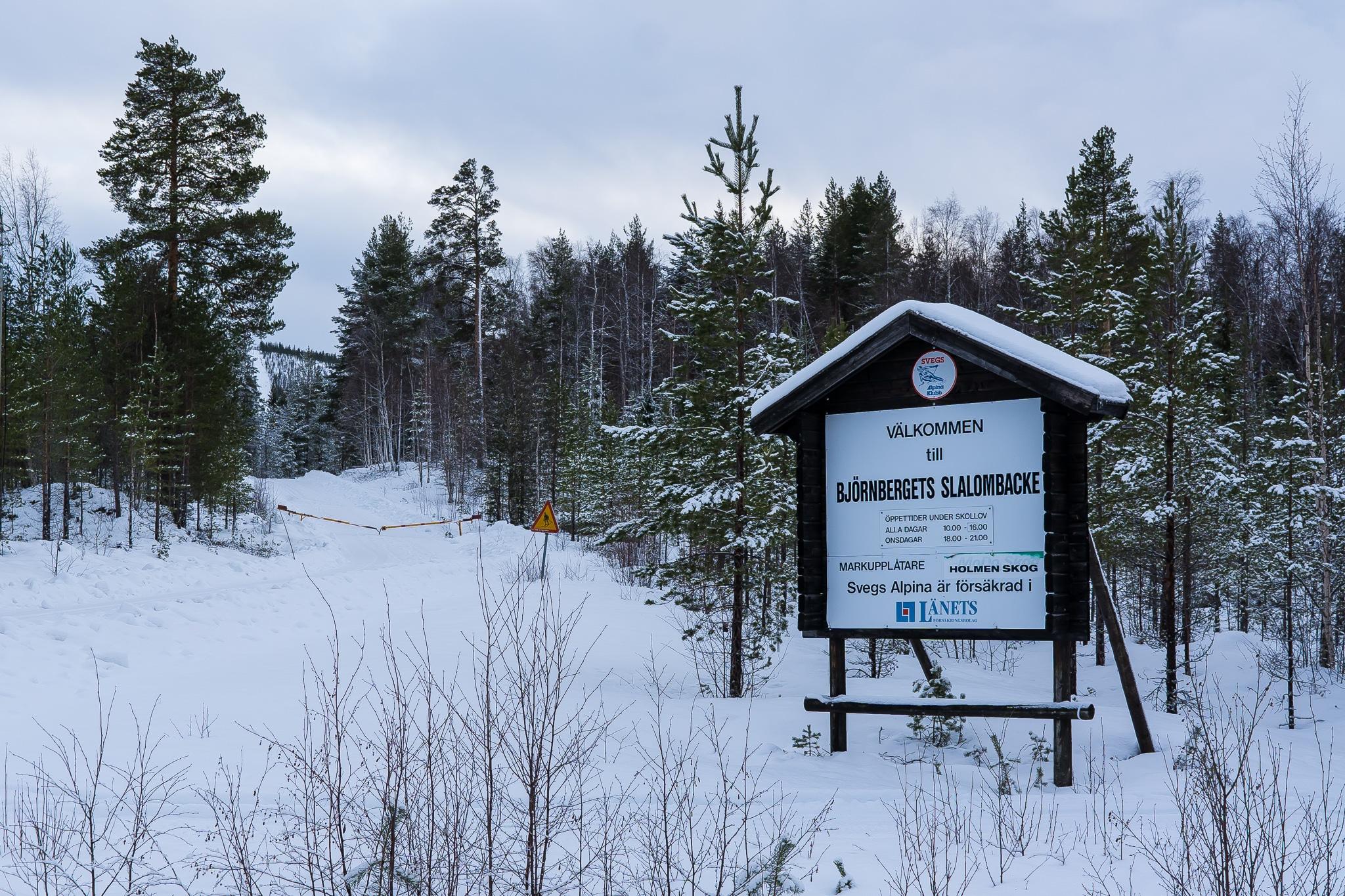 En nedfälld bom på vägen upp till Björnberget. En allt för vanlig syn den här säsongen. Foto: Morgan Grip